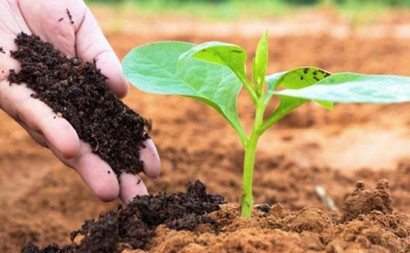 Khái niệm phân bón hữu cơ sinh học, phân vi sinh