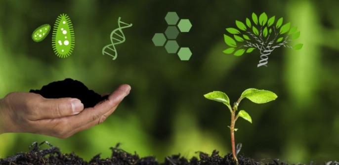 Khái niệm phân hữu cơ vi sinh
